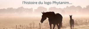 Le making of du nouveau logo de Phytanim